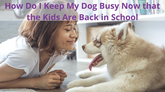 Kids Are Back in School, How Do I Keep My Dog Busy?