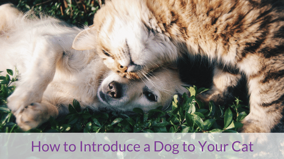 How to Introduce a New Dog to Your Cat