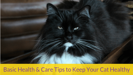 Basic Health & Care Tips to Keep Your Cat Healthy