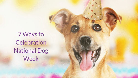7 Ways to Celebrate National Dog Week