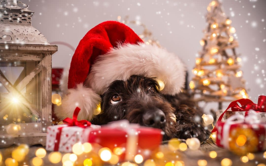 What to Get Your Dog for Christmas