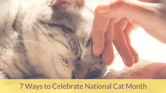 7 Ways to Celebrate National Cat Month