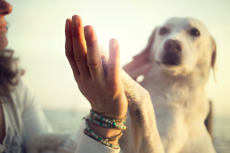 5 New Year's Resolutions For Your Pet