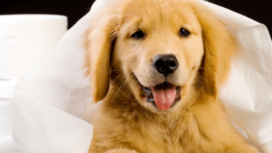 How to Potty Train a Puppy or New Dog