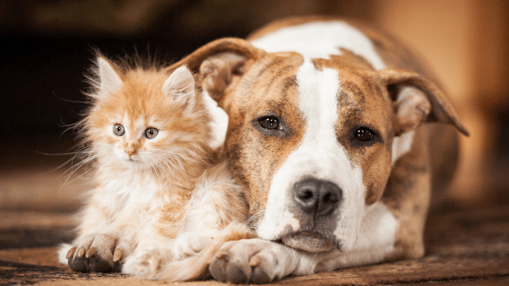 What Does it Mean to Be a Responsible Pet Owner?