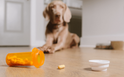 Pet Poison Prevention Tips