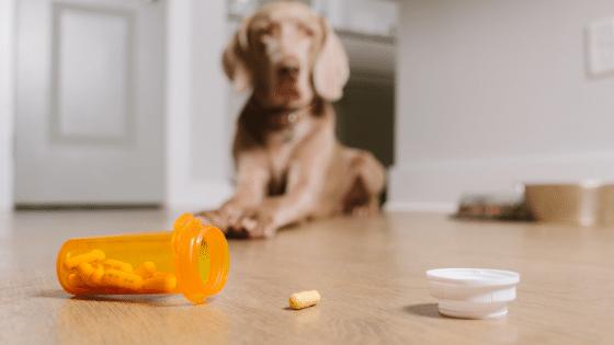 Pet Poison Prevention Tips