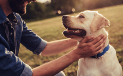 Activities for the Dog Dad This Father's Day