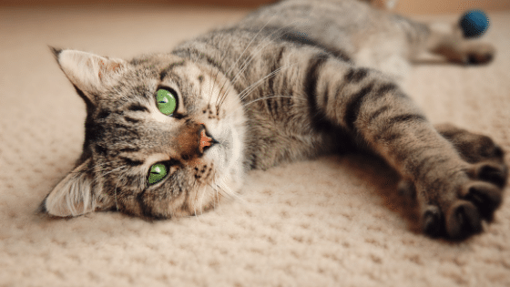 Is Adopting a Cat Right for You?