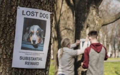 Preventing Lost Pets