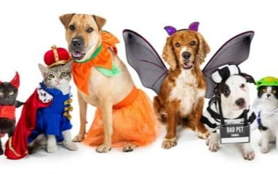 Top 7 Pet Costumes for Halloween