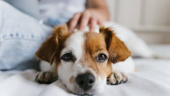8 Tips for Dealing With a Diabetic Pet
