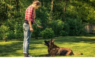 5 Basic Commands to Teach Your Dog