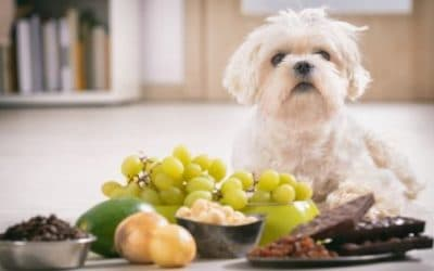 6 Things You May Not Have Realized are Poisonous to Your Dog