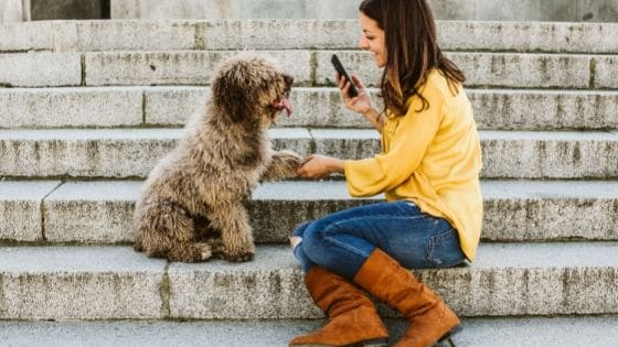 BEST APPS FOR DOG LOVERS