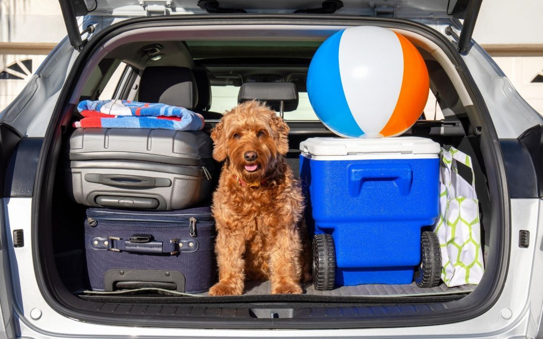 Tips for Vacationing With Pets