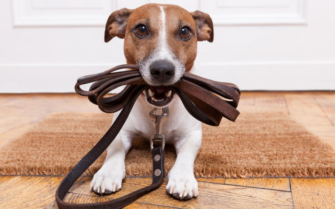 Do You Need a Dog Walker Now That You're Working From Home?