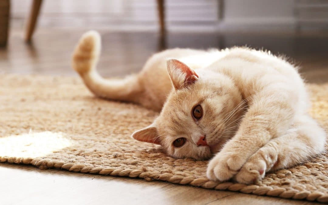 4 Types of Cat Cancer