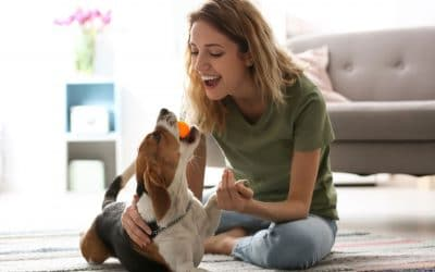 How to Prepare for an Elk Grove Pet Sitter