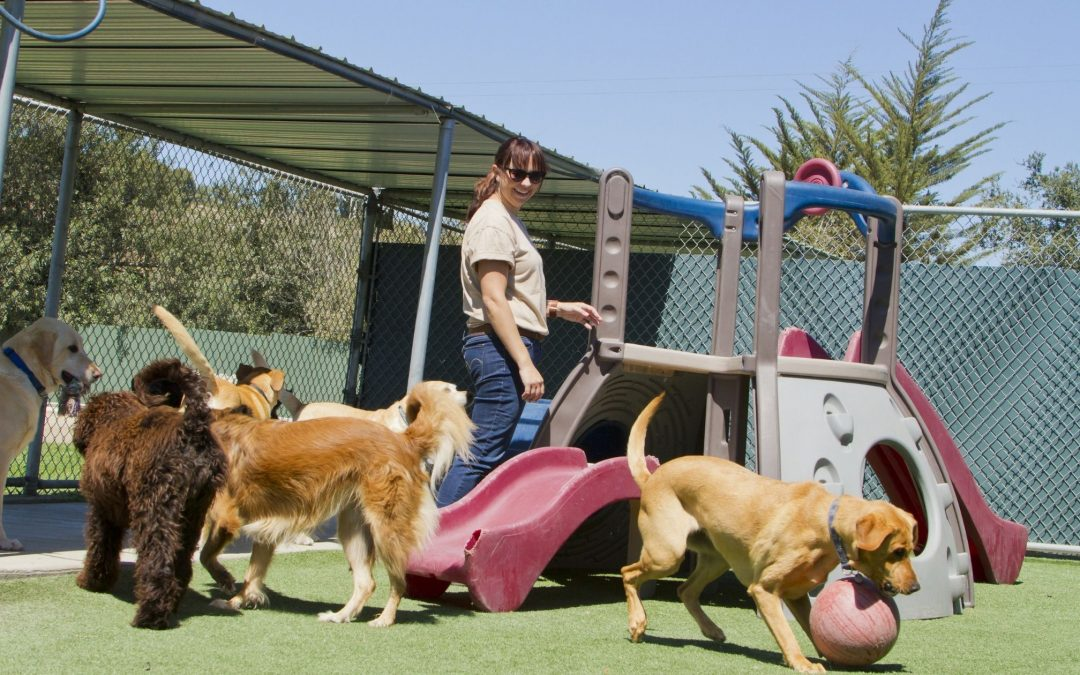 The Truth About Pet Boarding Facilities