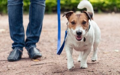 Differences Between a Professional Pet Sitter and a Hobby Pet Sitter