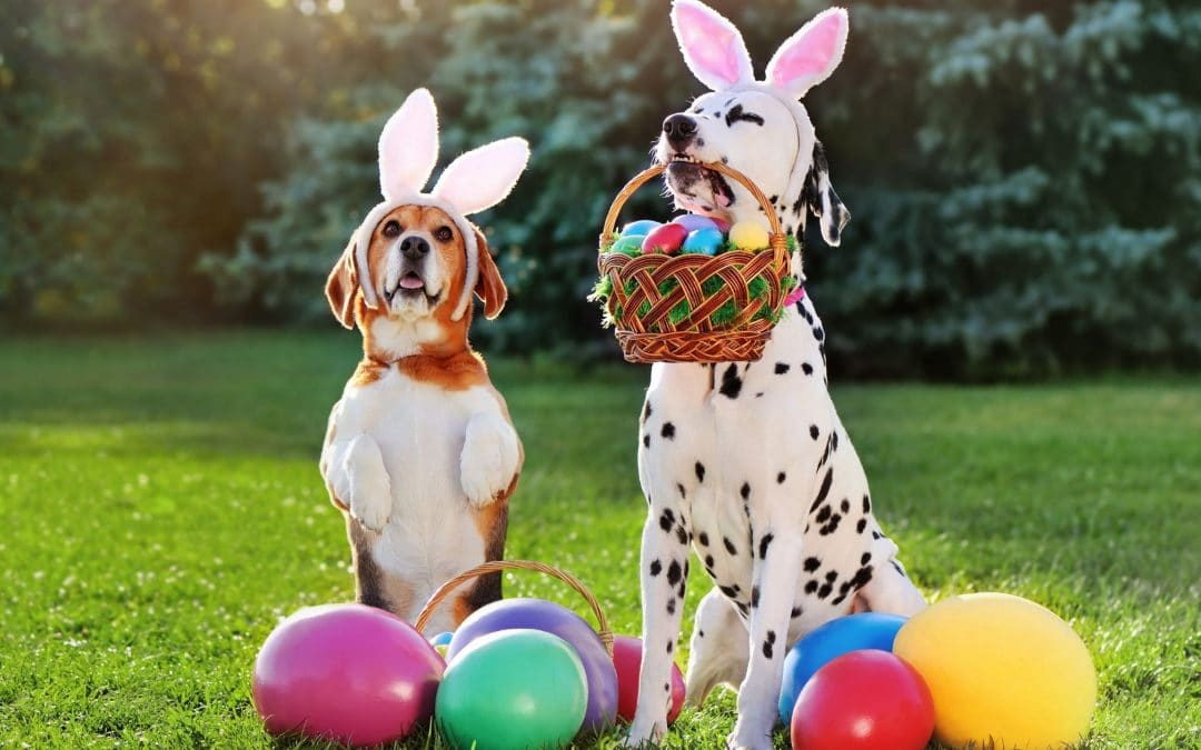 How to Host an Easter Egg Hunt for Dogs