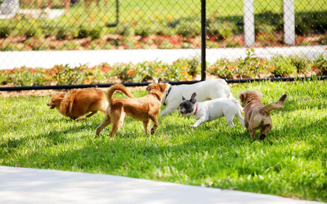 Elk Grove Dog Parks