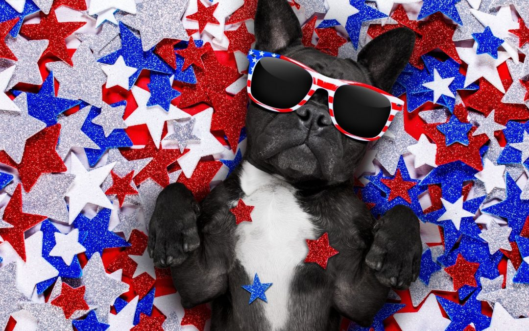 Fun Things to Do with Your Dog this Memorial Day Weekend in Elk Grove, CA