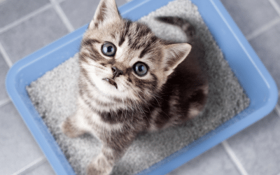 Why Cats Bury Their Poop