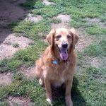 Clients of Elk Grove Dog Walker