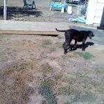 Clients of Elk Grove Dog Walking