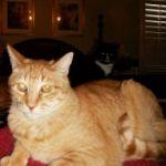 Clients of Elk Grove Cat Sitter