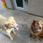 Clients of Elk Grove Pet Sitting